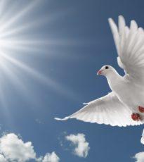 Pigeon Beautiful Best Hd Wallpaper 34
