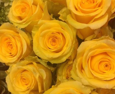 yellow roses - Barbara Dyer